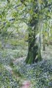 Beech Tree and Wild Garlic