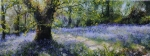 Bluebell Light 5