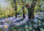Old Oaks and Bluebells