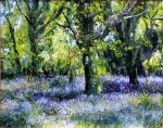 Oaks and Bluebells 5,