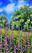Foxgloves and celendines