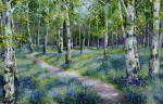 Silver Birch and Bluebells,.