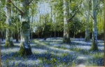 Bluebell and Celendines,.,